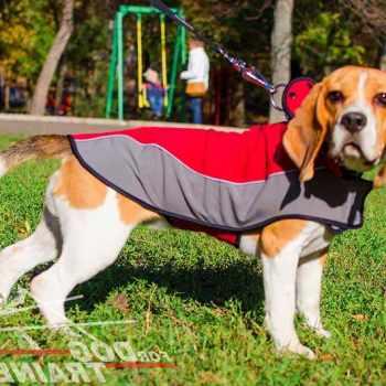 Beagle Dog Coats