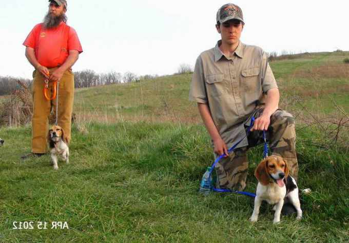 Beagle Gun Dog