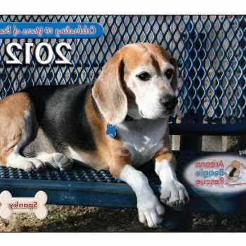 Beagle Rescue Az