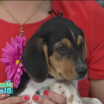 Beagle Rescue Omaha