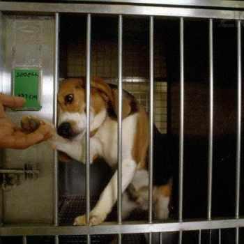 Beagle Testing