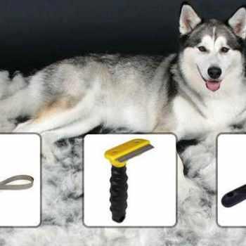 Best Dog Brush For Husky