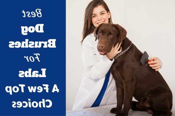 Best Dog Brush For Shedding Labrador