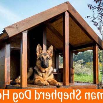 Best Dog House For German Shepherd