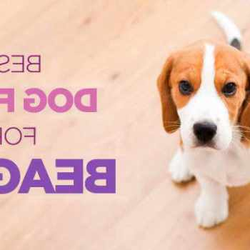 Best Food For Beagle Puppies
