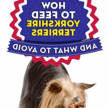 Best Food For Yorkshire Terrier