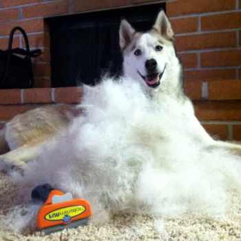 Best Furminator For Husky