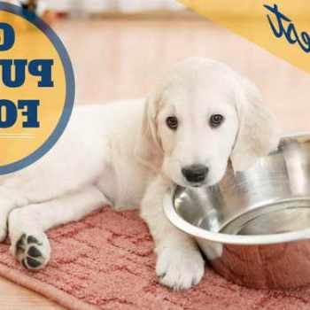 Best Puppy Food For Golden Retriever