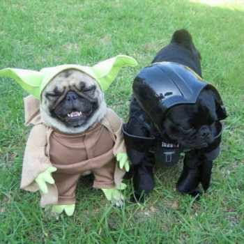 Black Pug Costume