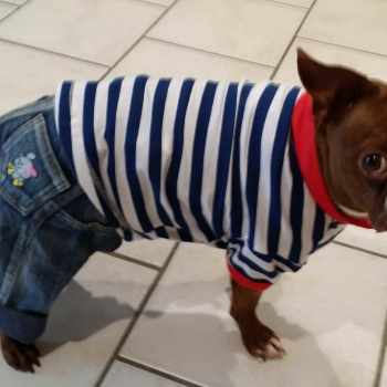 Boston Terrier Clothes For Dogs