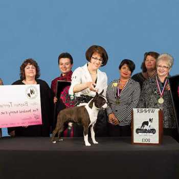 Boston Terrier Club Of America