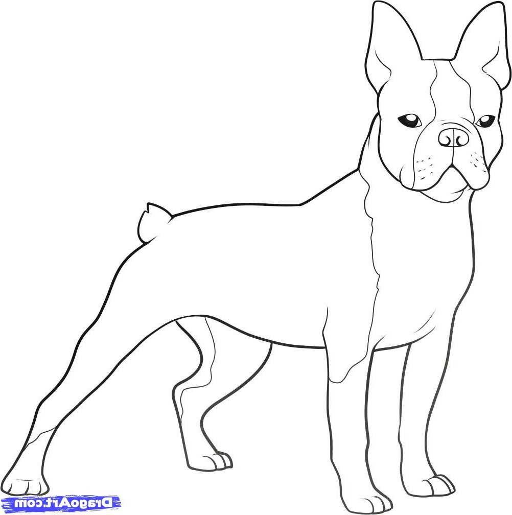 Boston Terrier Coloring Page  PETSIDI