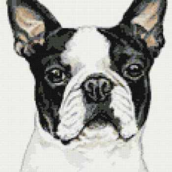 Boston Terrier Cross Stitch