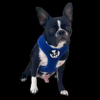 Boston Terrier Harness