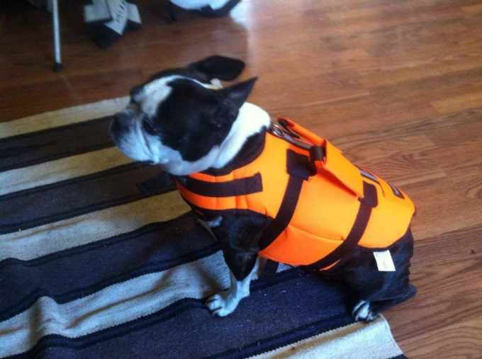 Boston Terrier Life Jacket