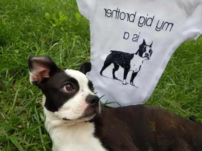 Boston Terrier Merchandise For Sale