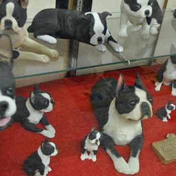 Boston Terrier Museum