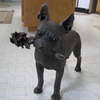 Boston Terrier Pups For Sale In Ohio
