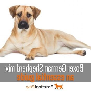 Boxer And German Shepherd Mix