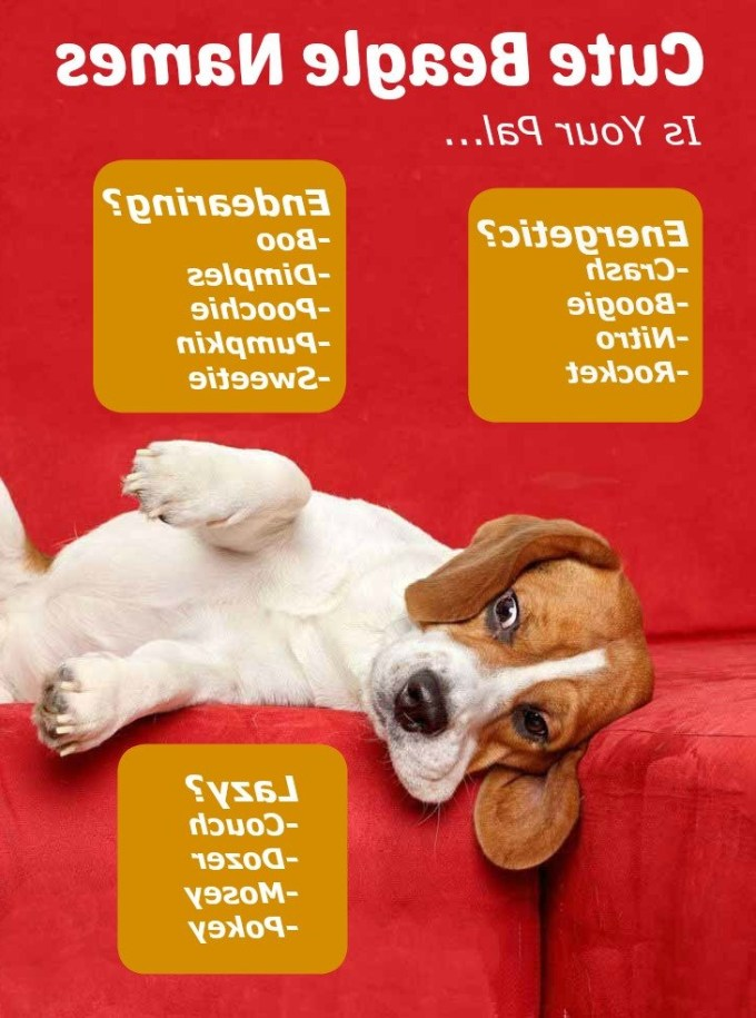 Boy Beagle Names