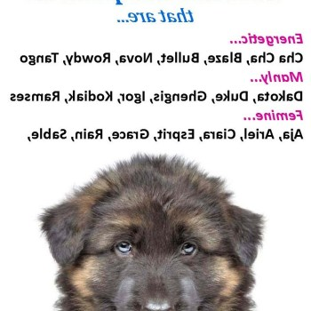 Boy Dog Names For German Shepherd