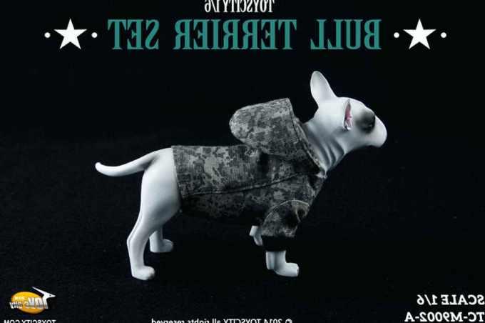 Bull Terrier Clothing