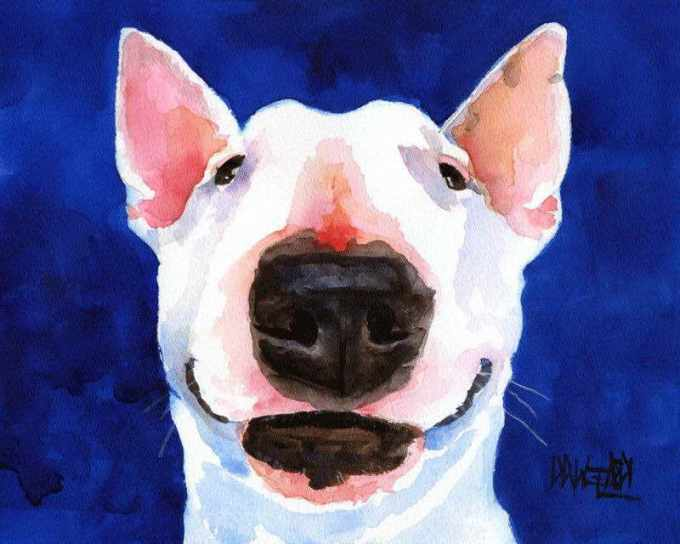 Bull Terrier Paint