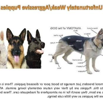 Caring For German Shepherd Puppies