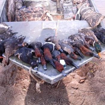 Catahoula Lake Duck Hunting