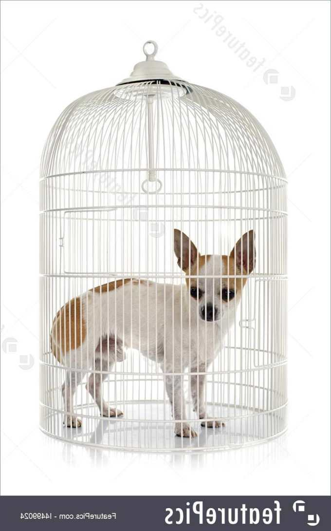 Chihuahua Cage