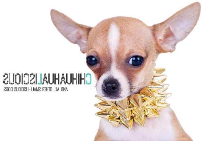 Chihuahua Collars