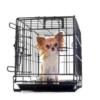 Chihuahua Crates