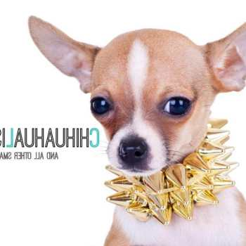 Chihuahua Dog Accessories