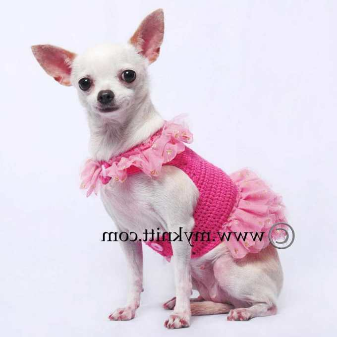 Chihuahua Dresses
