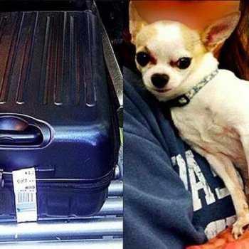 Chihuahua Flights