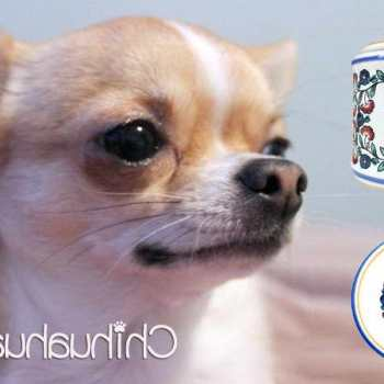 Chihuahua Gifts