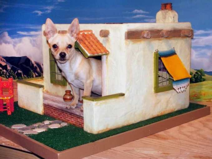 Chihuahua House