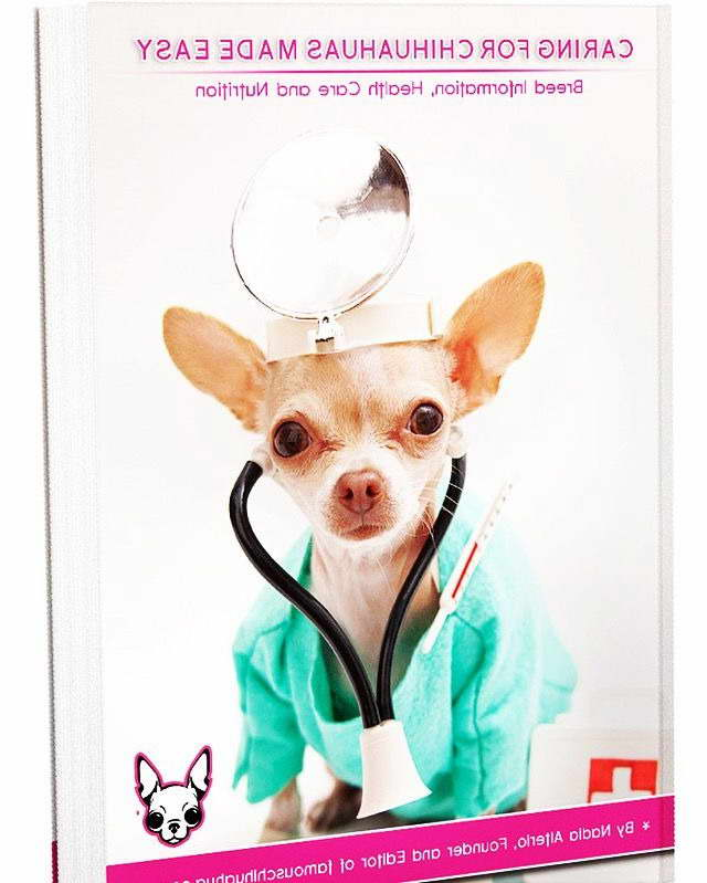 Chihuahua Information And Care