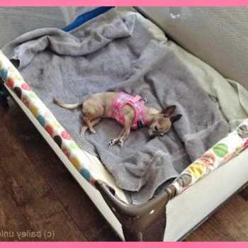 Chihuahua Playpen