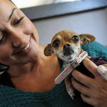 Chihuahua Puppy Atlanta