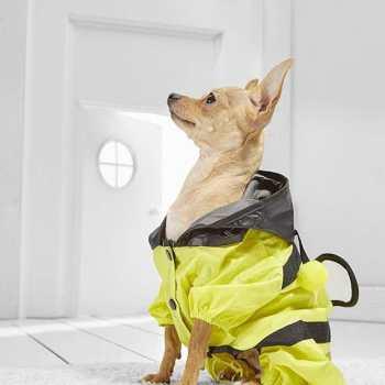 Chihuahua Raincoat