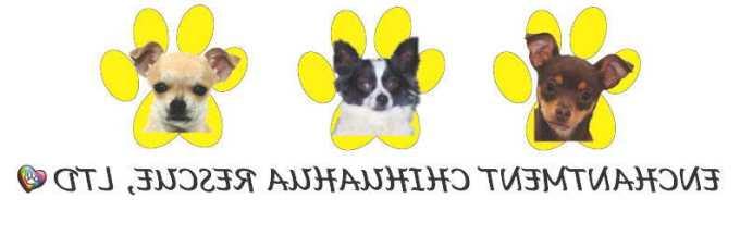Chihuahua Rescue Albuquerque