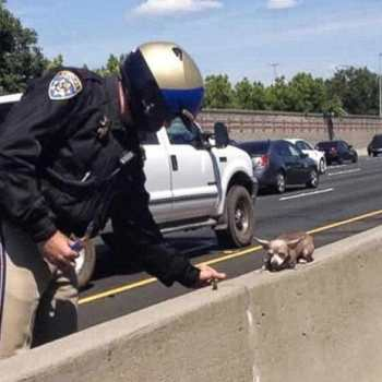 Chihuahua Rescue California
