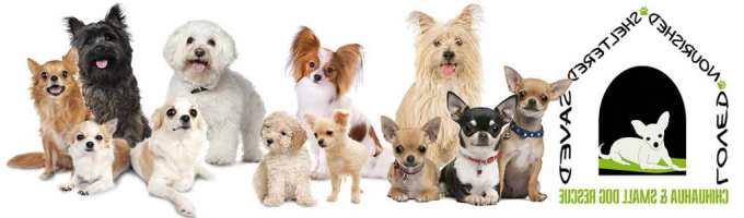 Chihuahua Rescue Colorado