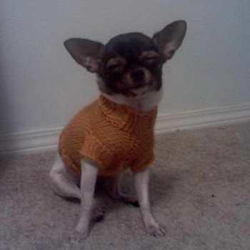 Chihuahua Sweater Patterns