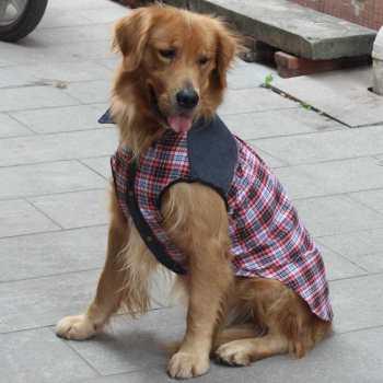 Dog Clothes For Labrador