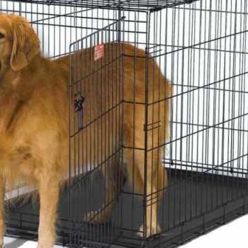 Dog Crates For Golden Retriever