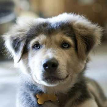 Cutest Husky Mix