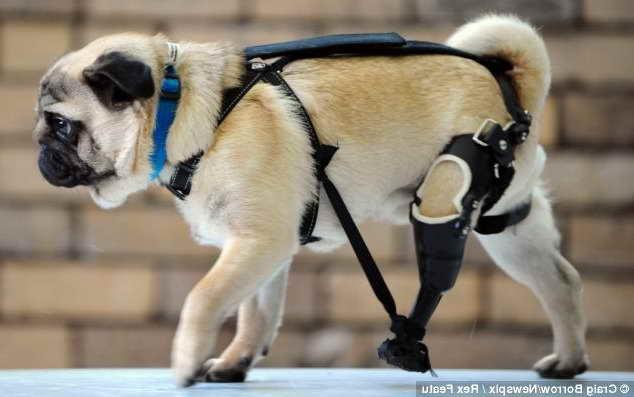 Denver Pug Rescue