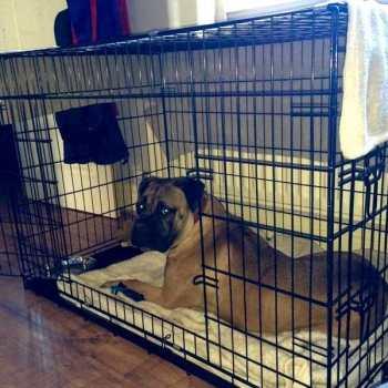 Dog Crate For Mastiff